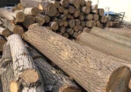 2019年中国木材消费量预计增长约7%